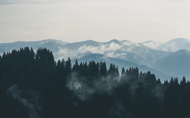 clouds-fog-forest-9754.jpg